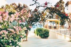 Hotelluteplats med gazeboen, med blomningbuskar vid havet arkivbild