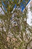 Hotelowa fasada w Egipt z kaktusowymi drzewami fotografia stock
