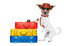 Hotelpagehund Stockfotografie