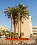 Hotels in central beach of Eilat Royalty Free Stock Photo