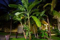 Hotelsbinnenplaats bij Nacht royalty-vrije stock foto