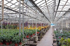 Hothouse. For a flower cultivation inside stock image