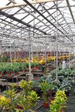 Hothouse. For a flower cultivation inside royalty free stock photo