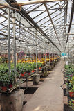 Hothouse. For a flower cultivation inside stock photos