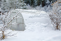Hothouse brought by snow. In the winter stock photos