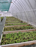 Hothouse for growing ornamental shrubs and cuttings_2. Polycarbonate greenhouses for growing cuttings of shrubs and ornamental crops in forestry Royalty Free Stock Photo