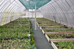 Hothouse for growing ornamental shrubs and cuttings_5. Polycarbonate greenhouses for growing cuttings of shrubs and ornamental crops in forestry Stock Image