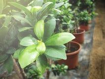 Hothouse Plant. Autumn Flower Textures Stock Images