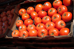 Hothouse Tomatoes Stock Photography