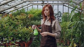 Hothouse worker wearing apron is watering plants and checking leaves while working inside greenhouse. Profession. Hothouse worker wearing apron is watering green stock video
