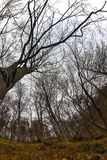 Hoto astratto di alcuni rami di inverno Immagini Stock