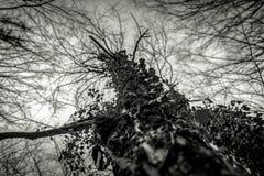 Hoto astratto di alcuni rami di inverno Fotografia Stock