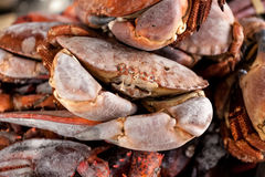 Hoto of pile of frozen black crabs Royalty Free Stock Image