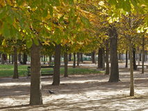 Hotspot park trees in autumn. Trees in the Paris Tuileries gardens park, one of Paris's hotspots, in green and yellow autumn colours Stock Image