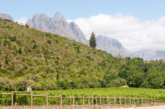 Hottentots-Holland Mountains towering above vineyards Royalty Free Stock Image