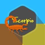 Hottentotta Tamulus Scorpion Stock Photos