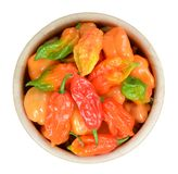 Hottest pepper Royalty Free Stock Photography