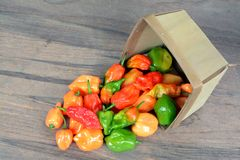 Hottest pepper Royalty Free Stock Photo