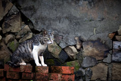 Hou Tunnel's Cat in Taiwan. Taiwan's Hou tunnel in my mind is a good place, in-depth Houtong station, I would like to cat friends will love this place royalty free stock photos