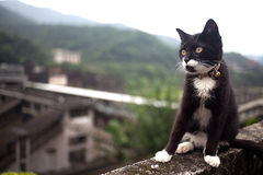 Hou Tunnel's Cat in Taiwan royalty free stock photo