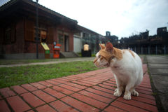 Hou Tunnel's Cat in Taiwan Royalty Free Stock Photos