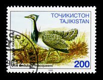 Houbara鸨鸟(奥蒂斯undulata),鸟serie,大约1996年 免版税库存照片