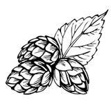 Houblon de croquis Illustration noire des houblon pour le brassage Image stock