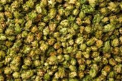Houblon en cônes frais vert pour faire la bière et le pain haut étroit Photos libres de droits