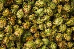 Houblon en cônes frais vert pour faire la bière et le pain haut étroit Image stock