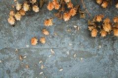 Houblon en cônes brun sec sur le fond concret brassage Ingre de bière Photographie stock libre de droits