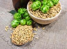 Houblon et grain frais d'orge - plan rapproché Photographie stock