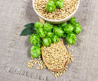 Houblon et grain frais d'orge - plan rapproché Image stock