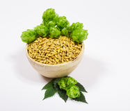 Houblon et grain frais d'orge - plan rapproché Photo libre de droits