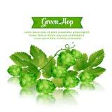 Houblon vert Photo libre de droits