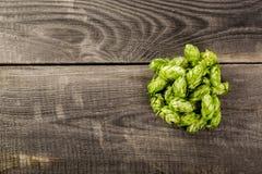 Houblon verts image libre de droits