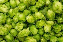 Houblon verts frais sur une table en bois Image stock