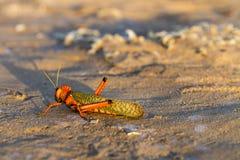 Houblonnage de plage Photo stock