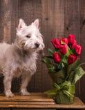 Houd en ruik de Bloemen tegen Royalty-vrije Stock Afbeeldingen