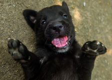 Houd glimlachend Royalty-vrije Stock Foto