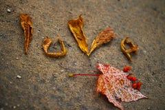 Houd van deze herfst Royalty-vrije Stock Fotografie