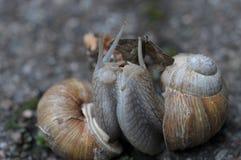 Houdende van slakken Stock Afbeeldingen