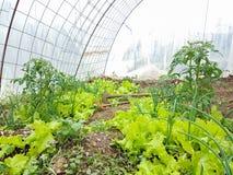 Houe de sol de terre de nourriture de feuilles d'agriculture de laitue photo stock