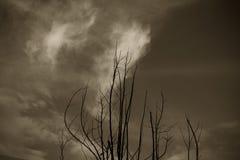 Houette de la rama de árbol Imagen de archivo libre de regalías