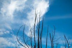 Houette de la rama de árbol Imagenes de archivo