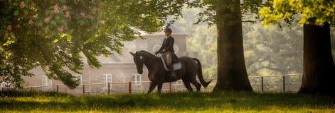 Houghton internationella hästförsök Maj 2017 Royaltyfri Fotografi