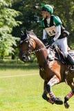 Houghton internationella hästförsök Ryuzo Kitajima som rider Feroza Royaltyfri Bild