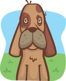 Hound. A hound dog sitting in a field Royalty Free Stock Image