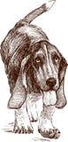 Hound de Basset Imagem de Stock Royalty Free