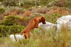 Hound dog stock images