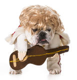 Hound dog Royalty Free Stock Photography